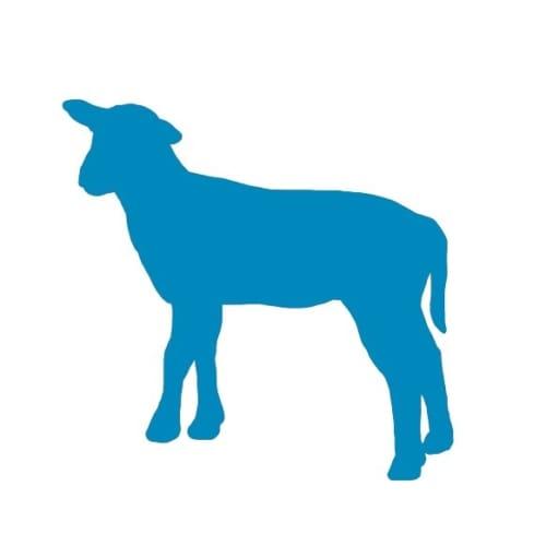 Lam icon
